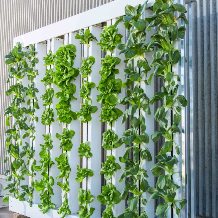 vertical-farm-916337_1920